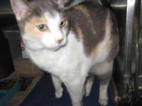 Calico - Agatha - Medium - Adult - Female - Cat Agatha