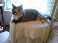 Calico - Angie - Small - Young - Female - Cat Angie is