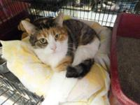 Calico - Bright Eyes Dundee - Medium - Adult - Female -