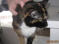 Calico - Callie - Medium - Senior - Female - Cat Callie