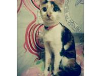 adorable calico kitten in need of a home asap. i