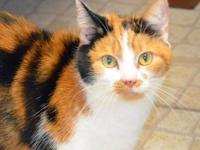 Calico - Luna - Medium - Adult - Female - Cat Luna is a