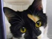 Calico - Reana - Medium - Young - Female - Cat Reana is
