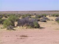City Lot 75' x 120' in California City. The property is