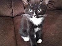 Calihou's story Calihou is a male tuxedo kitten, born