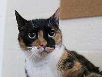 Calla's story I came to Cat Depot from Animal Services.