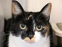 Calli's story Calli is a friendly calico cat who has
