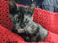 Callie is roughly 6 months old, sweet, good with other