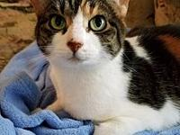 Callie's story Meet your new furry friend! I'm a sweet
