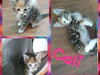 Callie's story Amber and her kittens were found under