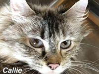 Callie's story Our pets are spayed/neutered and current