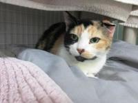 Cally's story Hello human friends! I have many