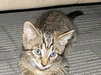 Calvin (male kitten)'s story Calvin is an adorable