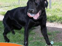 Calypso is a friendly and happy girl that has had a
