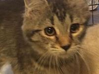 My story Camden is a female brown tabby with medium