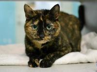 Cami's story Cami is a friendly, outgoing gal who loves