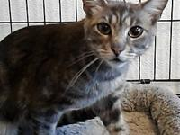 Camille's story Camille is a 1yo, short-haired, spayed