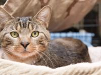 Camilo is a handsome brown tabby who was in terrible