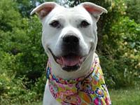 Cammi's story Cammi is a sweetheart of a gal! She's all