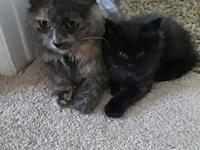 Cammie's story This is Cammie, she is a tortie long