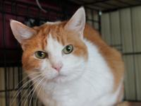Cammy short for Chamomile,  is a gorgeous senior kitty