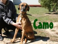 Camo came to us from Santa Rosa where he was RED ALERT