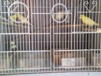 I have 20 canaries to rehome. Males and females but