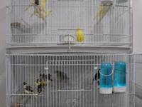 Green, Yellow, White, Red, Varigated Canaries available