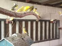Hi up for sale I have several canaries I have young and