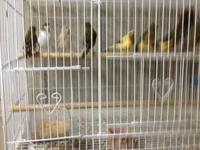Hi have several birds for sale I have a variaty of