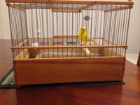 Canary Russian singer male- 9 months old $200 for more