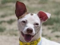 Candy Cane's story **REQUIRES A LONGER ADOPTION PROCESS