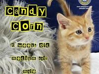Candy Corn's story You can fill out an adoption