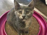 Candy's story *** PART OF A BONDED PAIR *** NAME: