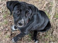 Candy's story Hi! I am part of a litter of three. Our