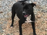 Candy is 6 months old, loves everyone, very sweet girl,