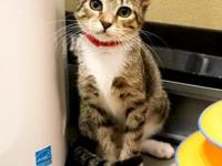My story Come visit me at the Orlando Cat Cafe! I am an