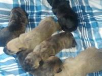 These pups are 1 week old and adorable. We have 5
