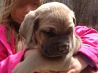 NOW TAKING DEPOSITS * Males & Females 6 weeks old Blues