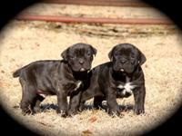 We have an outstanding litter born upon Jan. 15, 2014