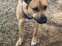 My story Canela is a 2 year old Lab mix that came to us