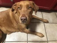 My story Foster Nortes: Canela is a sweet girl who is