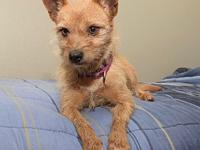 Canela's story Canela is a small lovable dog who is