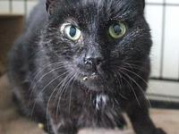 Cap'n Jack's story This sweet cat is available for