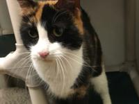 Meet Capi... a super friendly, one year old calico