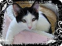 Cappy's story DOB: 9/7/10 Cappy is an affectionate,
