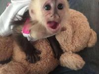 Capuchin, marmoset, squirrel and spider monkeys for