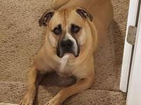 My story Cara is a 3 year old boxer mix who is looking