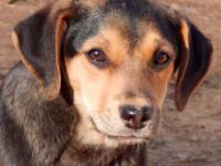 Caramel is a aprox 15 weeks will be available after