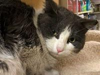 Caramel's story This guy is shy, but in a loving home,